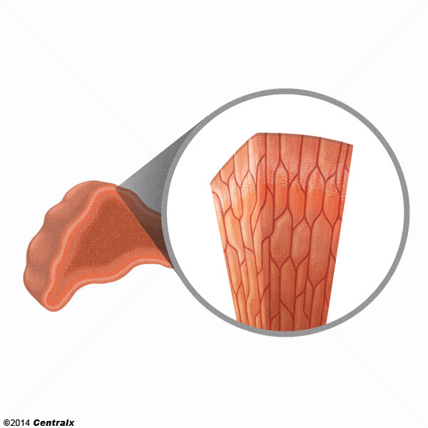 Células Cromafines