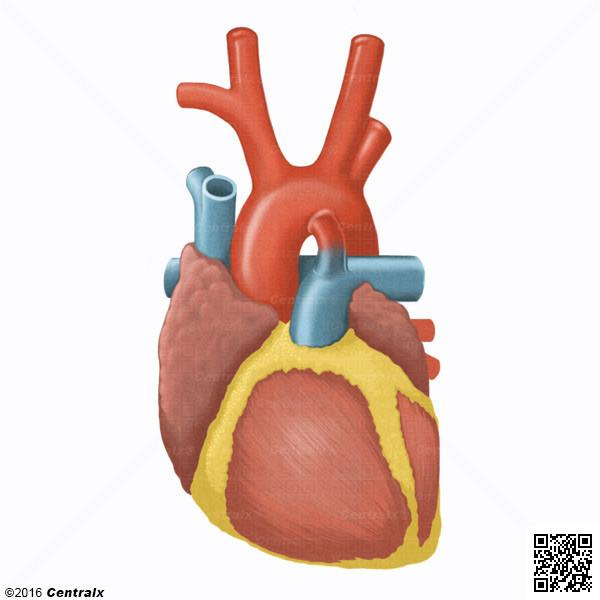 Conducto Arterial