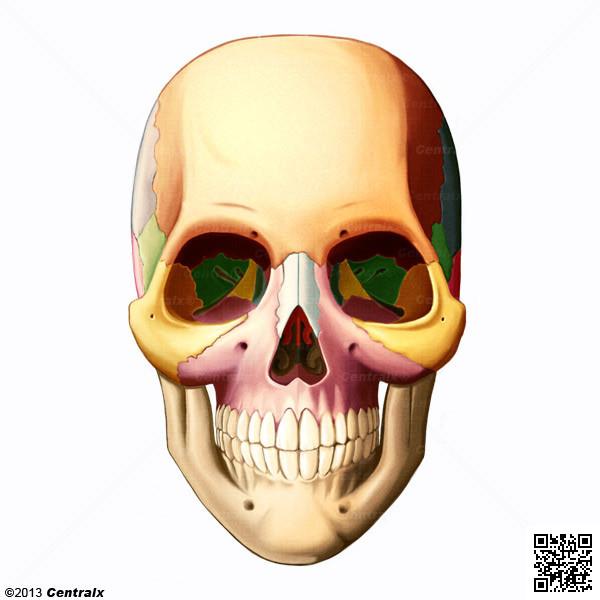 Huesos Faciales