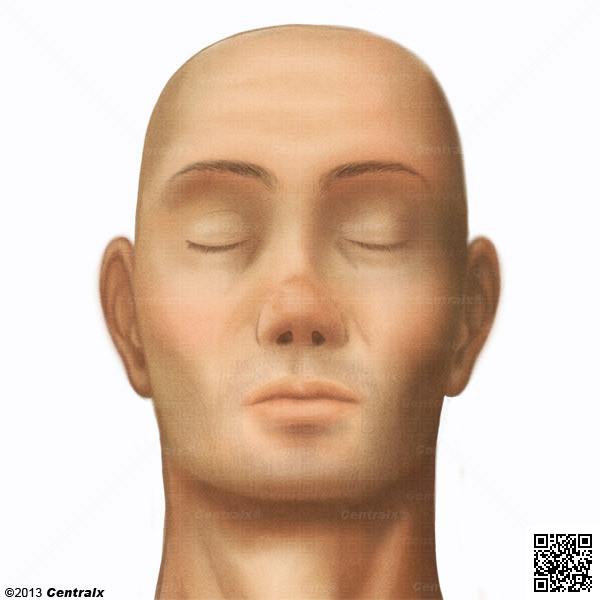 Cara - Atlas de Anatomía del Cuerpo Humano - Centralx