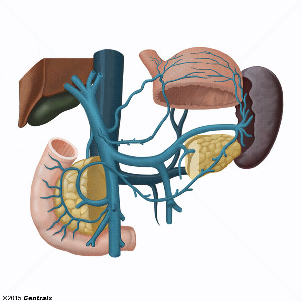 Sistema Porta - Atlas de Anatomía del Cuerpo Humano - Centralx