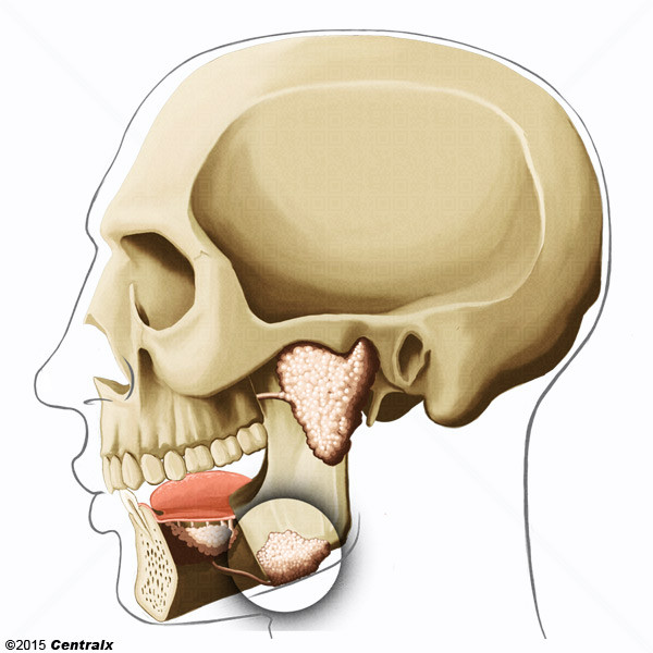 Glándula Submandibular