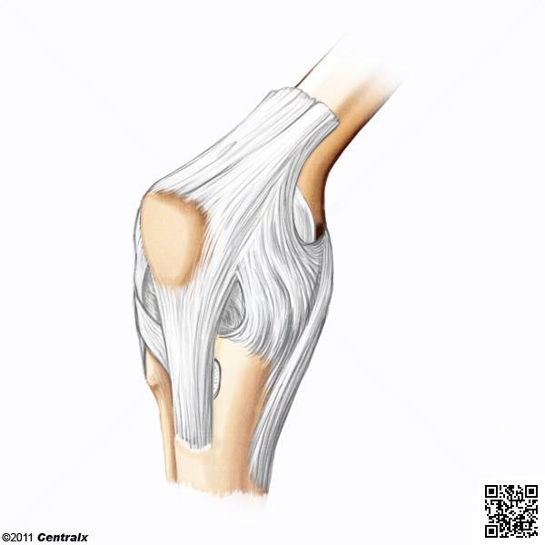 Articulación de la Rodilla - Atlas de Anatomía del Cuerpo Humano ...