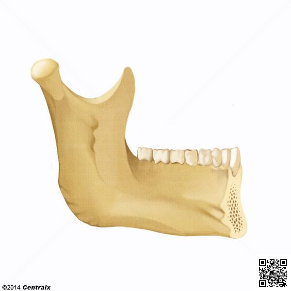 Procesos Alveolares