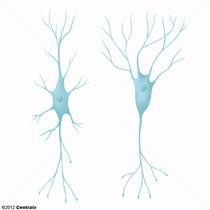Interneuronas