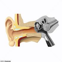 Oído Externo