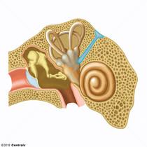 Conducto Endolinfático