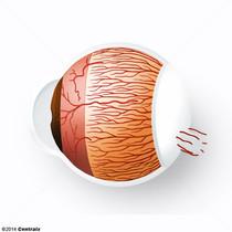 Arterias Ciliares