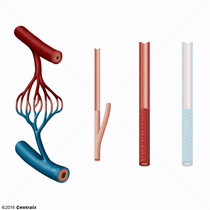 Arteriolas