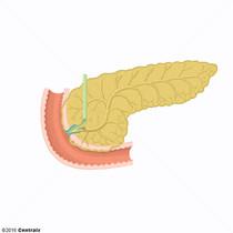 Esfínter de la Ampolla Hepatopancreática