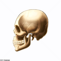 Disco de la Articulación Temporomandibular