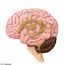 Acueducto Cerebral