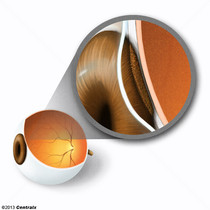 Epitelio Pigmentado Ocular